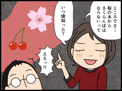 桜からさくらんぼがならないと知る4コマ漫画3
