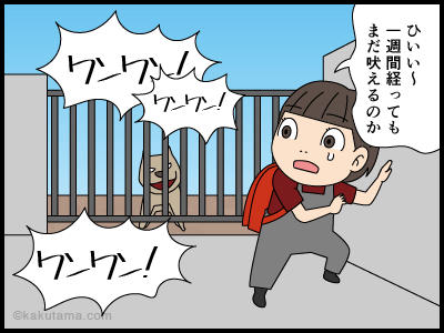 吠える犬に慣れてきて吠えられなくなった漫画1