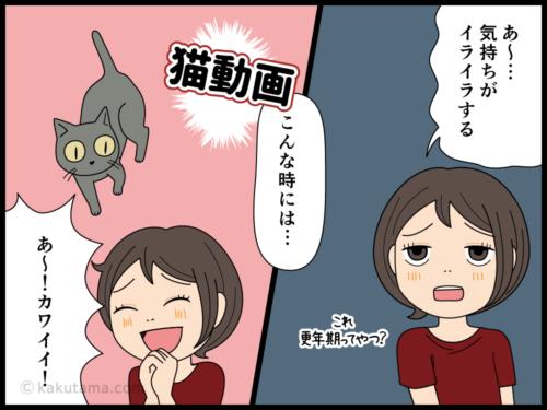 猫動画を見て癒やされる人の漫画1